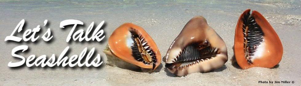 Lets Talk Seashells